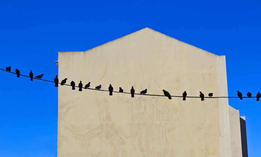 Silhouettes of pigeon birds resting on a wire. Silhouettes Sitting Bird Building Exterior Clear Sky Dirds Flock Of Birds Group Of Animals Line Art No People Outdoors Pigeons Resting Side Of Building Wall - Building Feature
