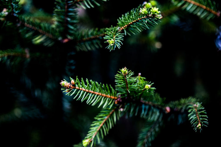 pine tree branch Tranquility Selective Focus Outdoors Plant Part No People Close-up Beauty In Nature Green Color Growth Focus On Foreground Tree Forest Fir Tree Pine Tree Needle - Plant Part Grassland Landscape Leaf Colorful Nature Colorful Summer Plant Mother Nature Nature EyeEmNewHere