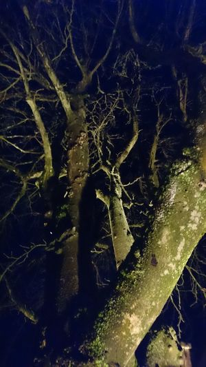 Close-up Illuminated Magic Light Magic Moments Mysterious Mysterious Place Mysteriously Nature Night Nightphotography No People Outdoors Tree Tree At Night Tree Branches Against The Sky Tree Illumination Art Is Everywhere The Great Outdoors - 2017 EyeEm Awards