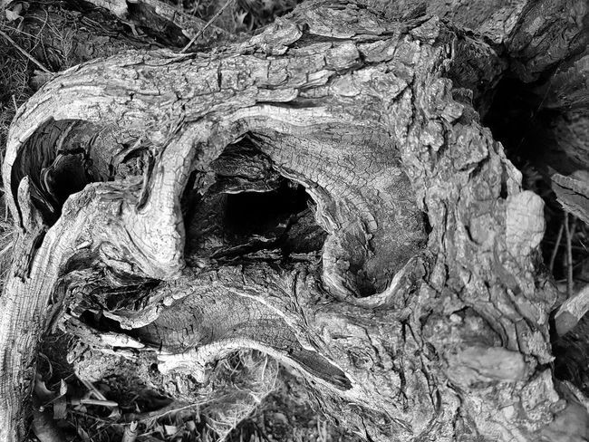 Verwurzelt No People Nature Tree Black & White Outdoors Möhnesee Smartphone Photography Root Root Of A Tree