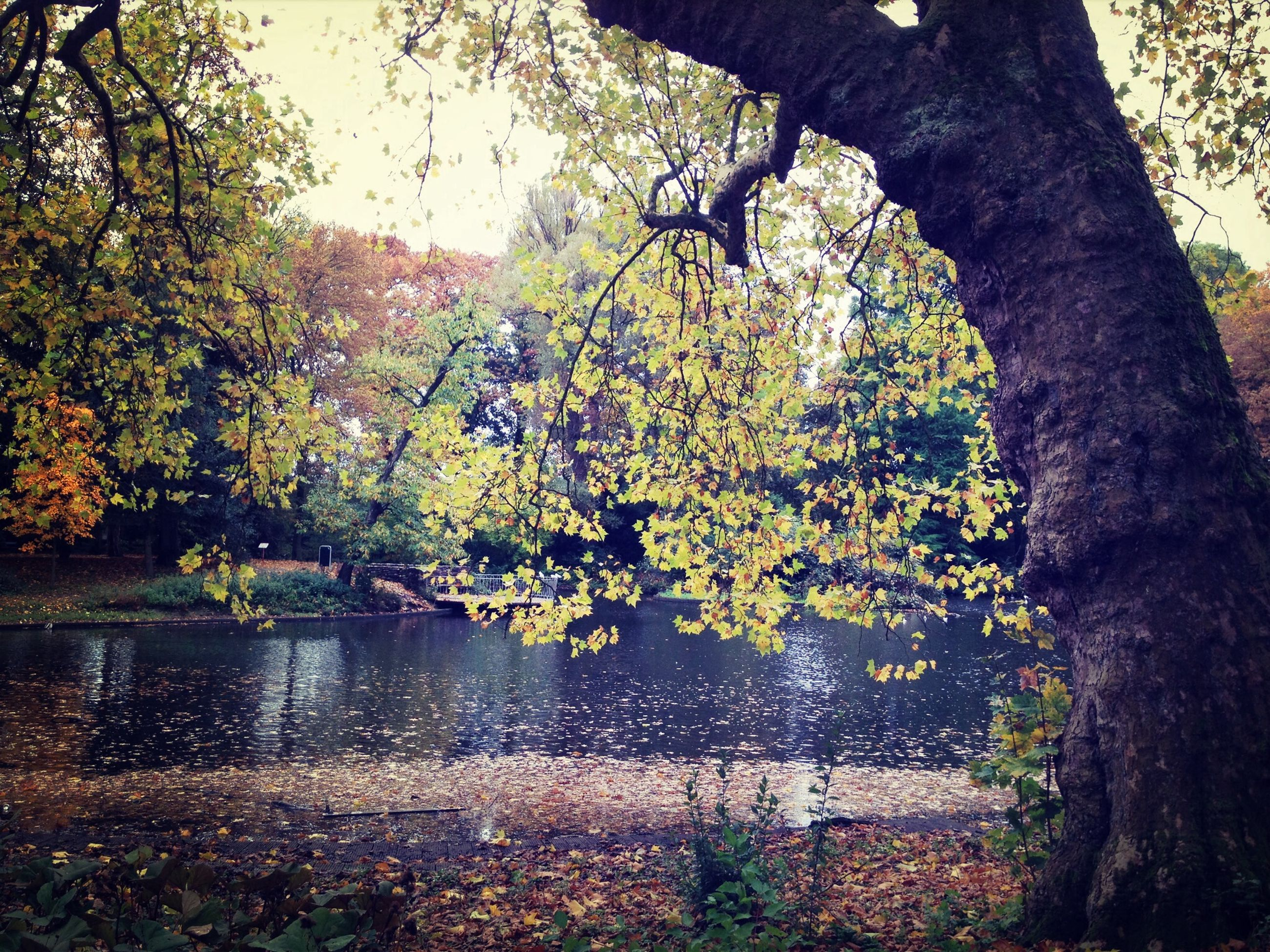 tree, water, lake, branch, reflection, tranquility, nature, growth, beauty in nature, tranquil scene, scenics, tree trunk, river, one person, day, outdoors, leaf, pond, plant, autumn