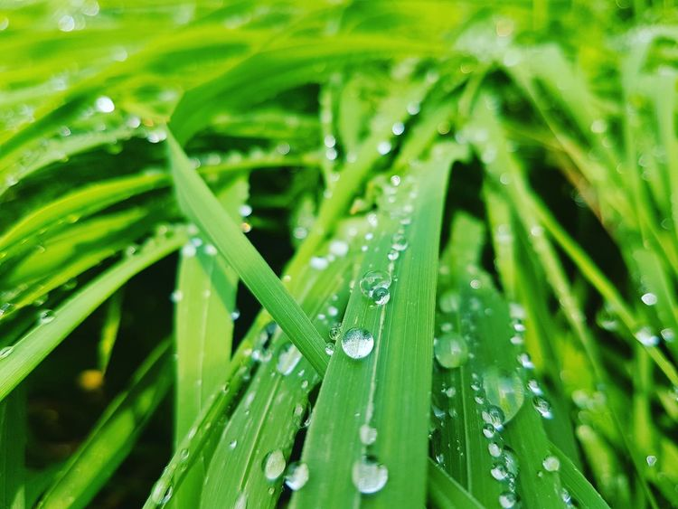Green Color Nature Drop Grass Close-up Beauty In Nature Freshness Water Day Green