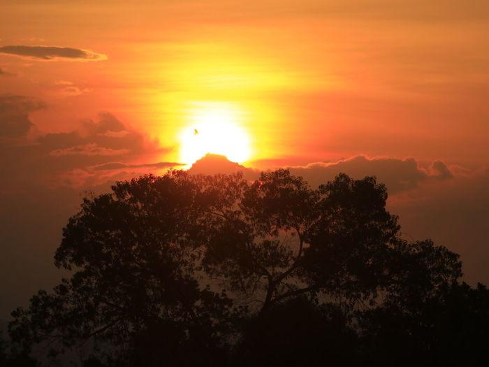 Silhouette trees against orange sky during sunset