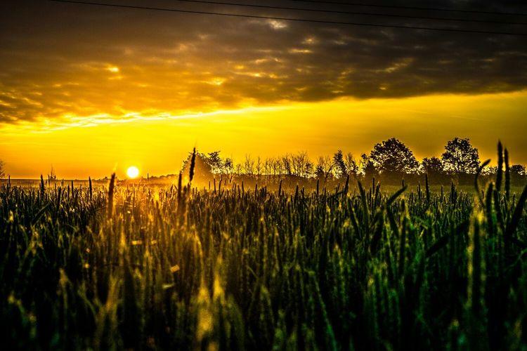 Sunset above crop field