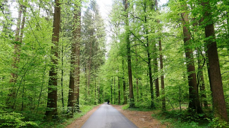 Green Color Nature Tree The Way Forward Landscape_Collection Beauty In Nature Scenics Nature Tree Infinity Diminishing Perspective Diminishing Point Road Growth Day Forest Outdoors Beauty In Nature Forest Path Distant High Lost In The Landscape Second Acts