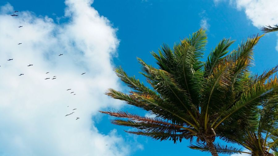 Blue sky Travel Destinations Vacations Summertime Sky Cloud - Sky Low Angle View Tree Plant Nature Growth Flying Day Bird Beauty In Nature No People Vertebrate Palm Tree Animal Themes Animal Blue Animals In The Wild Flock Of Birds Outdoors