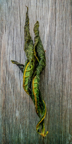 Leaf Entwined Leaves🌿 Leaves Leaves_collection Leaf Leafs Photography Leafporn Still Life Still Life Photography Modern Modernist Contemporary Art Contemporary James Aiken James Aiken Photography Fine Art Fine Art Photography Patterns And Textures Pattern, Texture, Shape And Form Patterns & Textures Textures And Surfaces Textures Decay Decaying Decayed Beauty Entwined