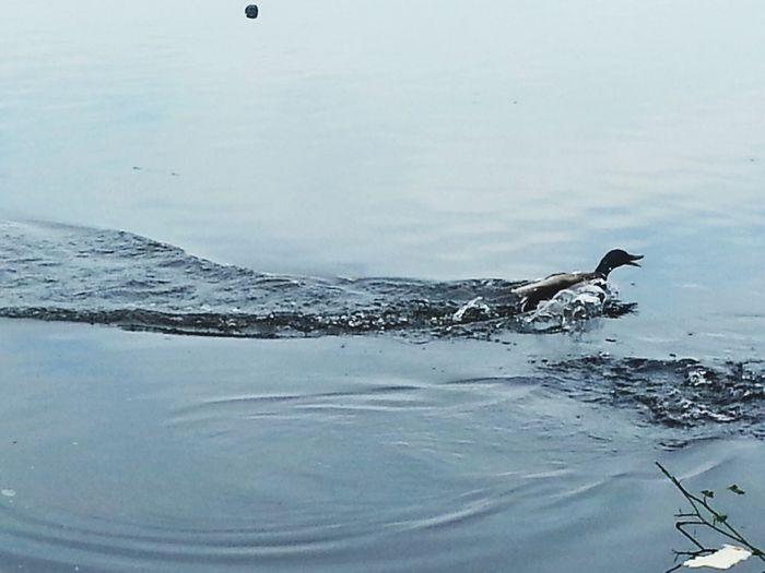 Duck The Landing