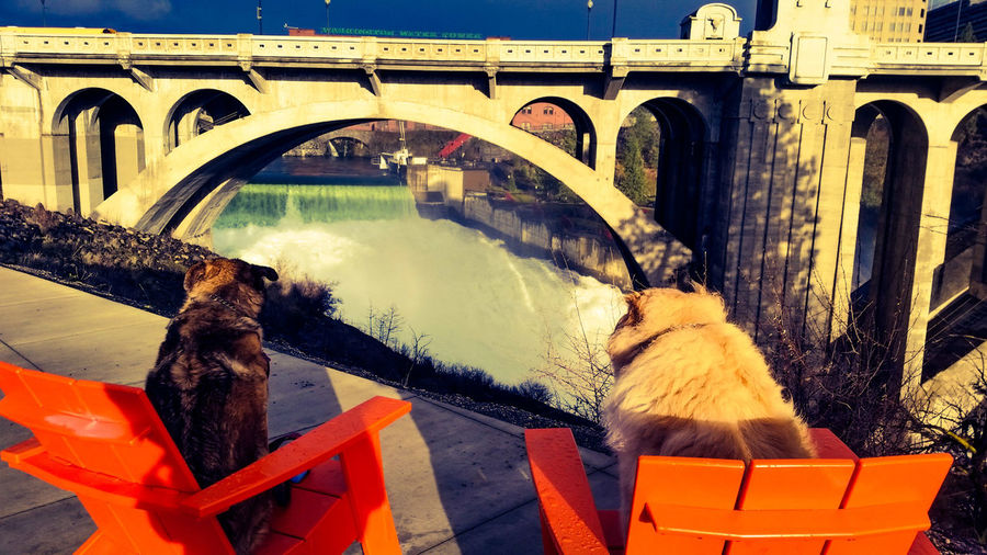 Rear view of dogs resting on adirondack chair against monroe street bridge