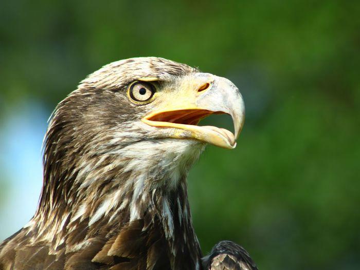 Sherkan Bird
