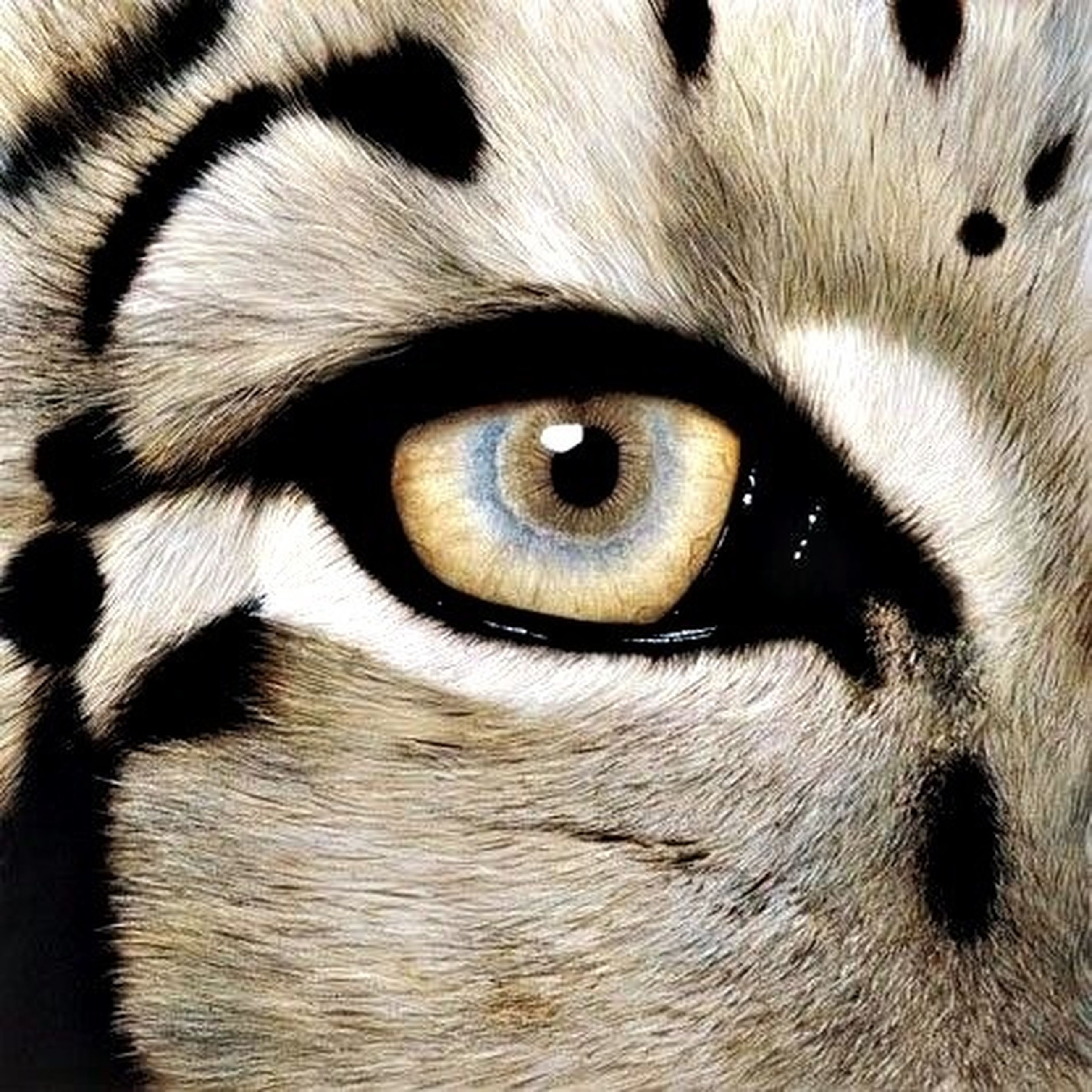 full frame, backgrounds, one animal, animal themes, close-up, animal body part, animal head, part of, extreme close-up, extreme close up, detail, animal eye, mammal, pattern, textured, domestic animals, portrait, no people, natural pattern, pets