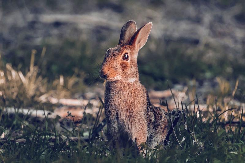 Rabbit in the sun