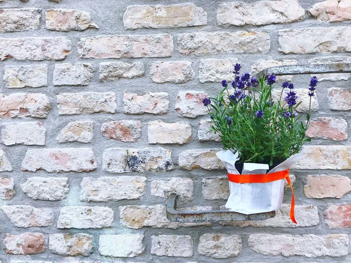 Lavender plant on a bare brick wall Lavender Plant Lavender Wall - Building Feature Plant Flower Flowering Plant No People Architecture Built Structure Day Wall Growth Potted Plant Nature Outdoors Building Exterior Pattern