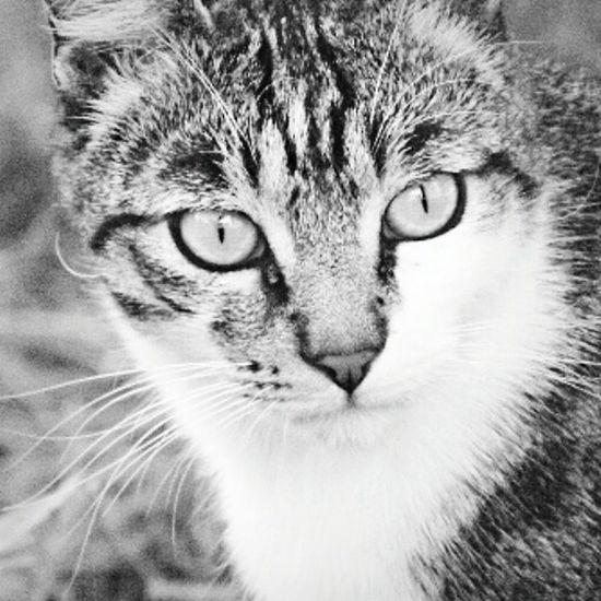 Uno sguardo dice molto di più rispetto a mille parole... E ciò non vale solo per le persone! Gatto Gattino Biancoenero Micio MicioGatto Gatto😸 O-o-Occhi Di Gatto  Miciomiao Sguardo  Blackandwhite