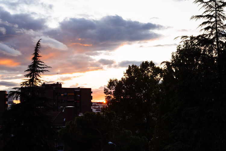 Silhouette trees and buildings against sky during sunset