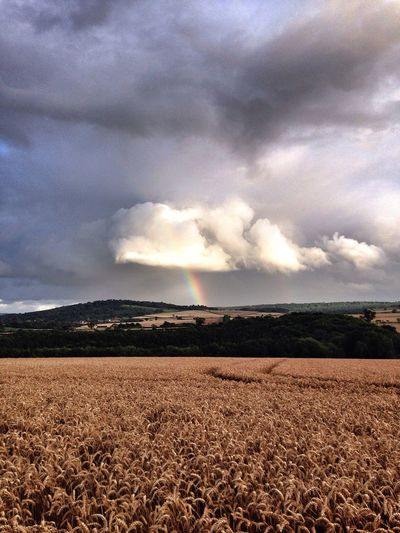 Searching for the proverbial pot of gold! Nothing beats the British Countryside approaching Harvest