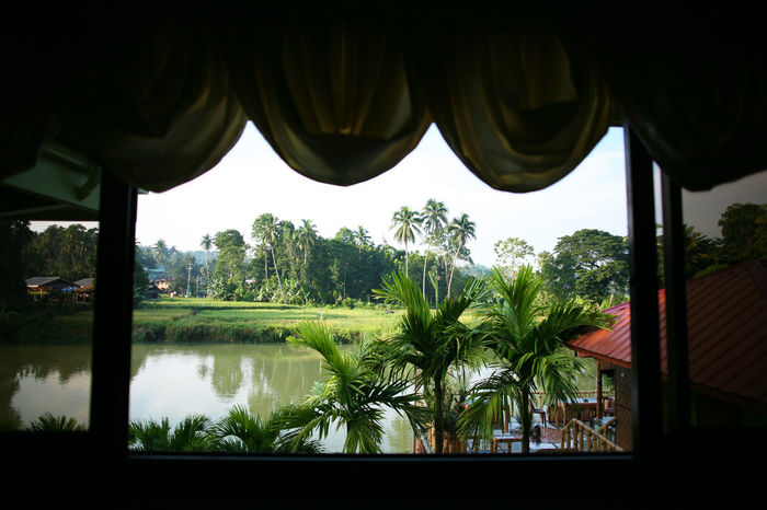 View of the Loboc River and surrounding jungle of Bohol from a building window Bohol Philippines The Philippines Banana Tree Beauty In Nature Close-up Day Green Color Growth Leaf Loboc Loboc River Nature No People Outdoors Palm Tree Plant Rice Paddy Scenics Sky Tree Water