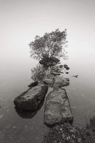 Isle Monochrome Landscape_Collection Landscape Nature_collection Waterscape Lakeside Lone Tree Windermere Waterfront Lake View Lakeside Cumbria Lake District Tree Nature No People Water Tranquility Day Outdoors #FREIHEITBERLIN