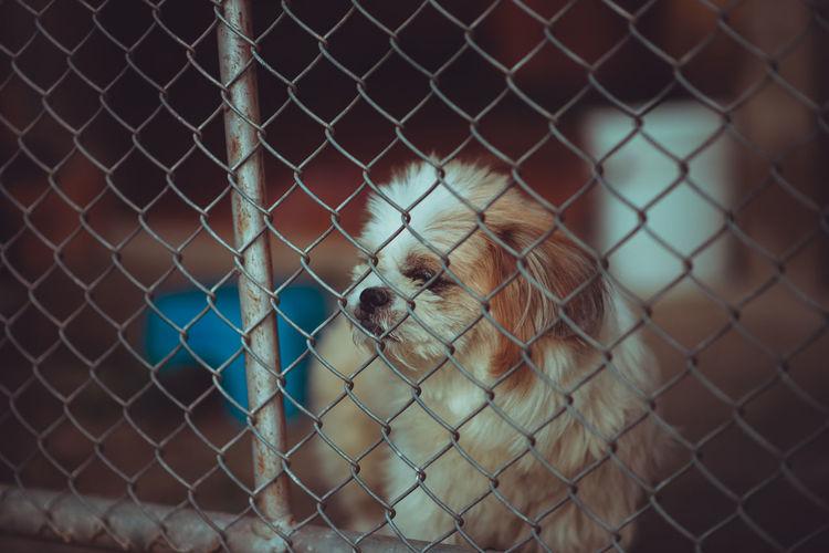 Dog locked in a cage,vintage color tone