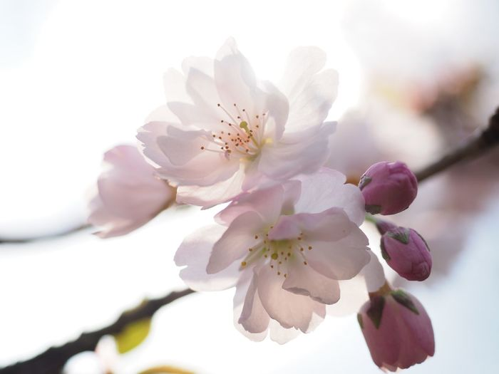 spring 2019 EyeEm Selects Flowering Plant Flower Plant Fragility Beauty In Nature Growth Flower Head Tree Freshness Pink Color