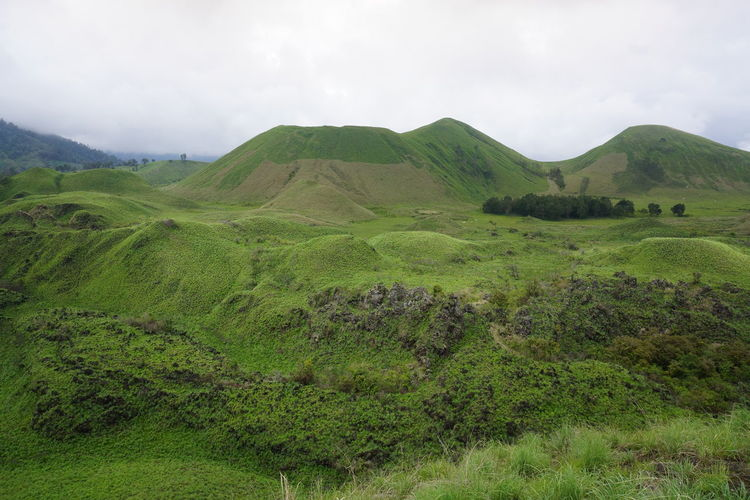 wurung crater in Bondowoso district, managed by Perhutani Public Corporation. Landscape Environment Scenics - Nature Mountain Plant Land Beauty In Nature Green Color Nature Tranquility Travel Destinations Tranquil Scene Outdoors No People Non-urban Scene Cloud - Sky Volcanic Crater Sky Grass Day
