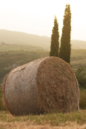 close up of hay bale in front of cypresses in the morning Tuscany Landscape Italy Hay Bales Golden Farm Light Field Straw Nature Italian Travel Hills Vacation Agriculture Rural Meadow Scenery Countryside Harvest Farmland Cypress Traditional Toscana Beautiful Summer Holidays Tuscan Europe Hay Bale Sunlight Close Up Dawn Morning Warm Scenics - Nature Harvesting Bale  Rural Scene Tranquil Scene Tranquility Environment