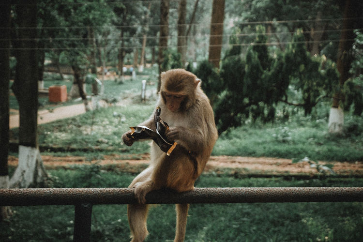 Animal Head  Animal Themes Animal Wildlife Animals In The Wild Day Focus On Foreground Greenery Mammal Monkey Nature Nature On Your Doorstep No People Outdoors Railing Tree