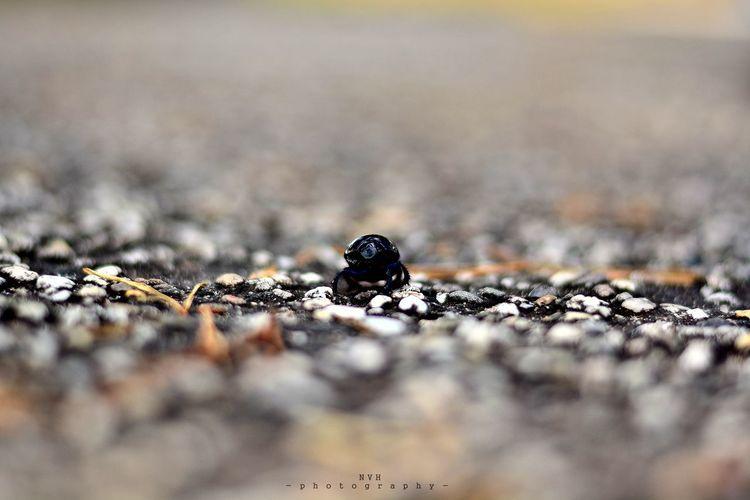 Close-up Nature Selective Focus Bokeh Photography First Eyeem Photo