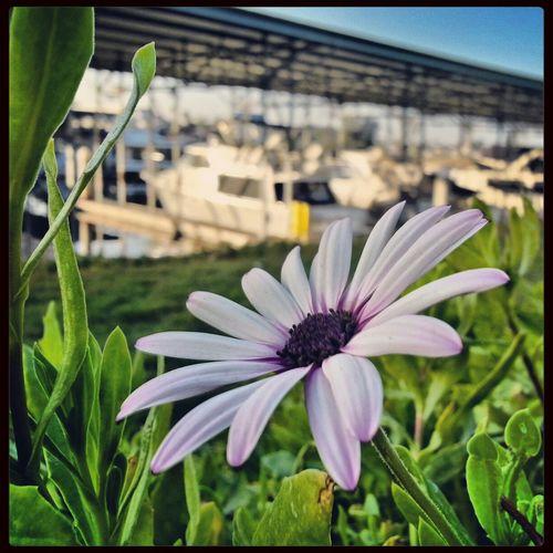 Nature Flowers Daisy Taking Photos