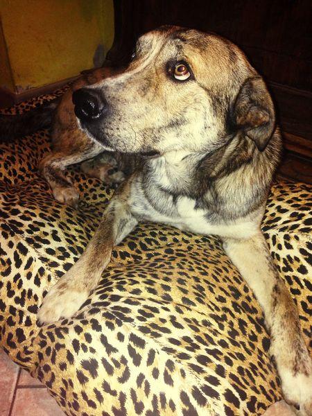 Lovely Ilovemydog Iloveyou Mydog My Love Amor Forever Animalier