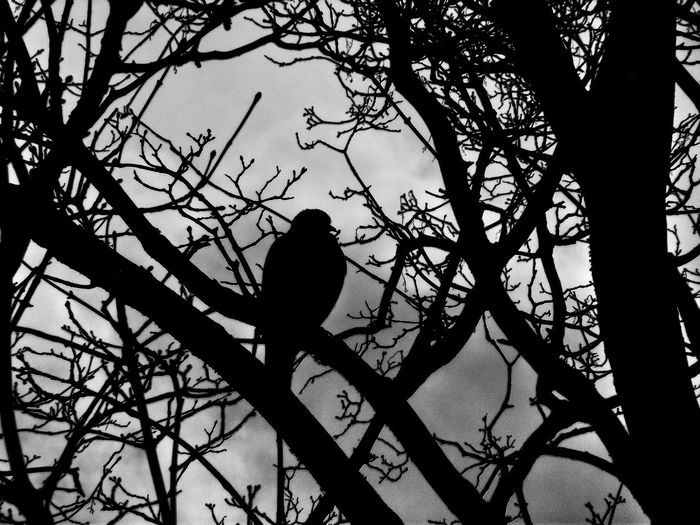 Taken on a very cloudy day but I love the way this looksNo Edit Juxt Photography Beautiful Nature Looking Through The Trees EyeEm HDR Showcase: February Eyeem Photography Eyeem Shadows Photography Shadows & Light Silhouette_collection Darkness And Light Fujifilm Popular Photo EyeEm Best Shots - Black + White Eyeem Black And White Simplicity Animals Posing Taking Photos No Edit/no Filter Purist No Edit No Filter Creative Light And Shadow Shades Of Grey Black And White Photography Monocrome Monochrome Collection Birds Of EyeEm  Birds_collection Here Belongs To Me