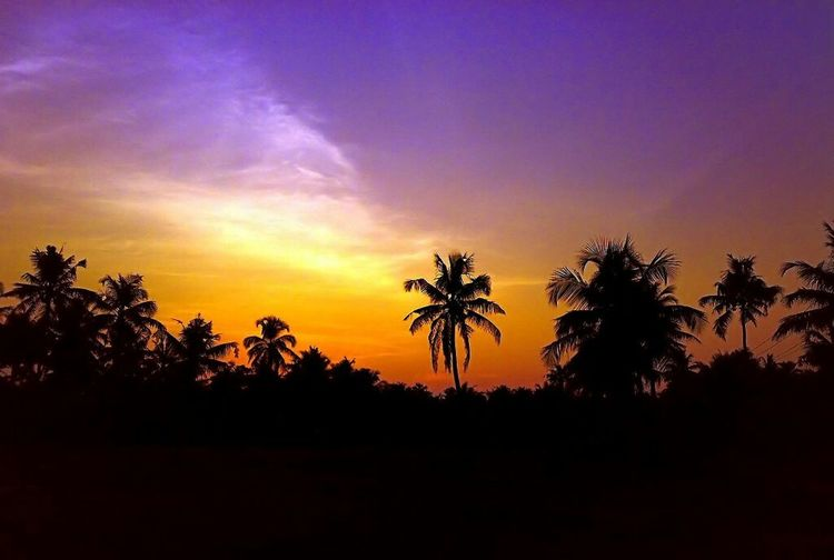 Multi colored sunset view over the trees Nature Landscape Kerala India Travel Outdoors Romantic Sunlight ☀ Lights & Shadows Sunset Colours