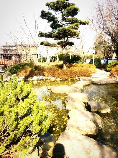 Japanese Garden Sunshine Garden Trees Peace Relaxing Enjoying Life Noestoyenjapón