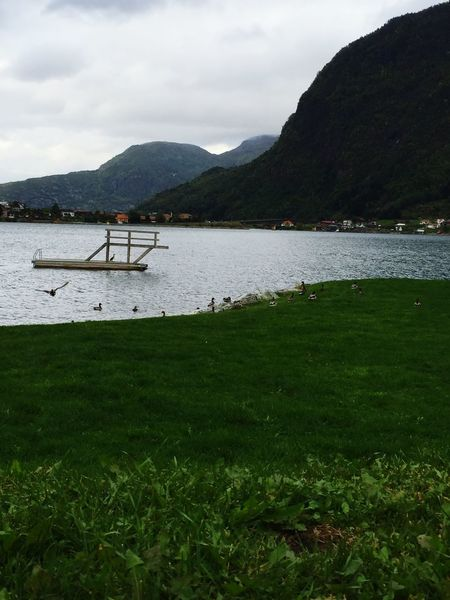 Duckattack at the beach today! Ducks Sogndal
