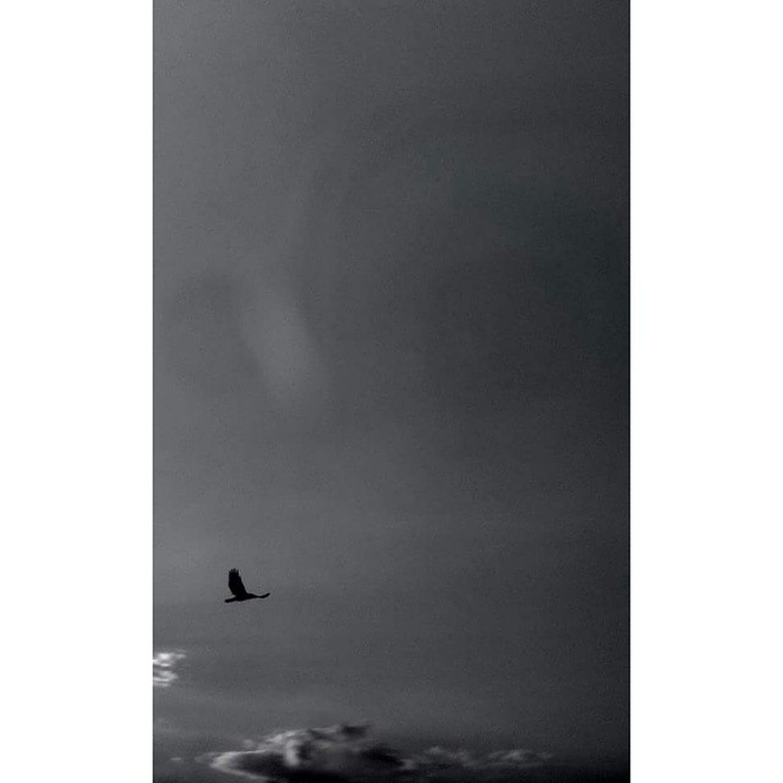 low angle view, bird, transfer print, flying, animal themes, sky, auto post production filter, wildlife, animals in the wild, silhouette, one animal, copy space, nature, cloud - sky, overcast, no people, beauty in nature, day, outdoors, tranquility