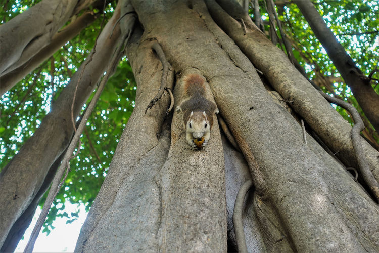 Low angle view of animal on tree trunk