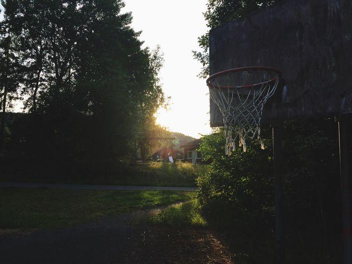 Basketball Hoop Nature Sunlight Outdoors Sport
