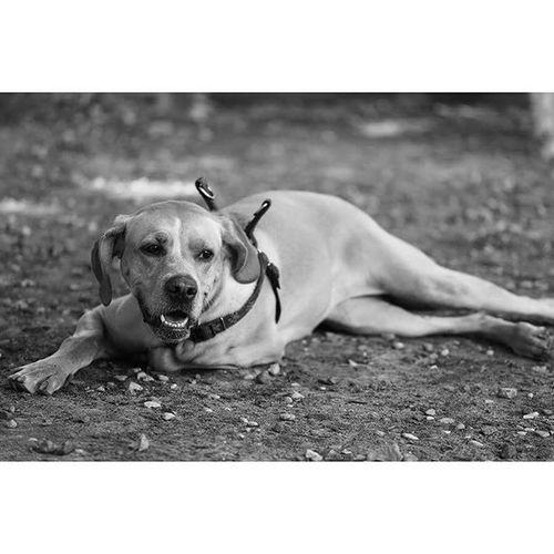 Gtcompany Gtcreate Psiwybiegbankowy Canon Doggie Dogs Instadog Dogsareawesome Petphotography Dogphotography Dog Piesel Psiwybieg