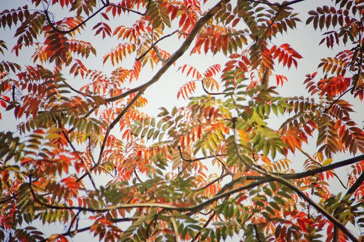Red leafs | Low Angle View Nature Beauty In Nature Tree Leaf Growth Outdoors Beauty In Nature Quite Moments Personal Perspective Still Life Nature Japan Through My Eyes Tokyo Japan |
