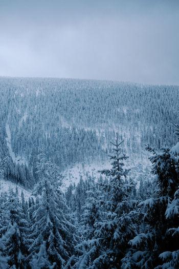 Close-up of snow on landscape