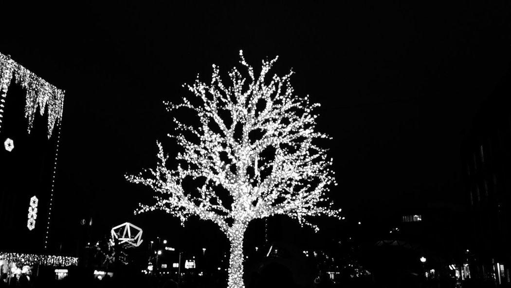 Night Nightphotography Eindhoven Netherlands Kerstmis Light Christmas Tree