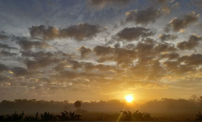 sunrise in the fog Trees And Sky Sunrise And Clouds Sunrise Palm Trees Trees And Sky Florida Nature Florida Sunrise Cloudy Foggy Morning Tree Tree Area Sunset Illuminated Forest Fog Rural Scene Multi Colored My Best Photo
