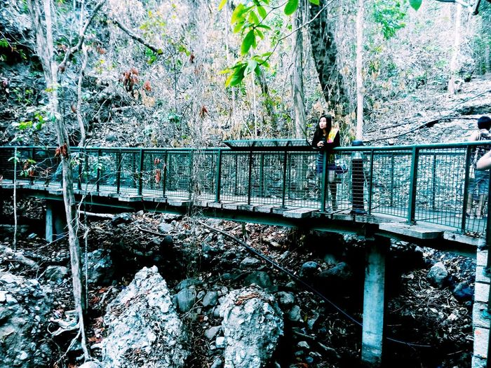 Close-up of footbridge over railroad track in forest