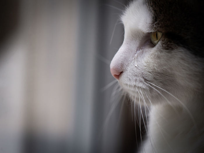 Tears Emotion Light Teardrop Animal Animal Themes Animals Cat Cats Close-up Domestic Domestic Animals Domestic Cat Eye Feline Looking Mammal Pet Pets Profile View Sad Sadness Tear Tears Whisker EyeEmNewHere The Portraitist - 2018 EyeEm Awards
