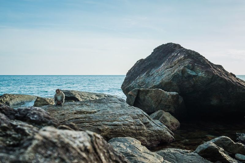 Monkey sitting on the rock at sea in thailand Animal Wildlife Animal Monkey Sea Rock Sky Rock - Object Solid Water Beauty In Nature Beach Horizon Over Water Outdoors