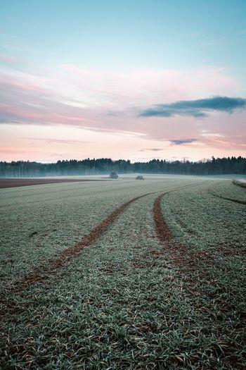 Morning frozen