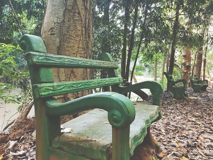Park Summer Walking Tourism Sri Lanka Day Outdoors No People Green Color Nature Tree Plant Growth Close-up EyeEmNewHere California Dreamin Stories From The City