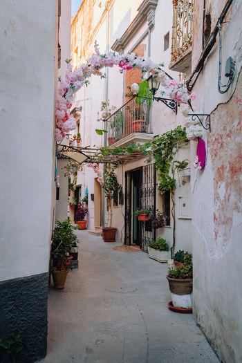 Potted plants on alley amidst buildings in city
