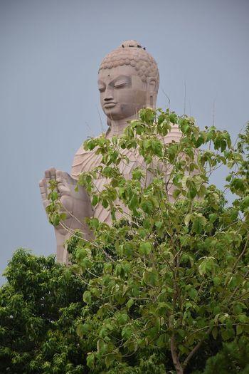Tree Ancient