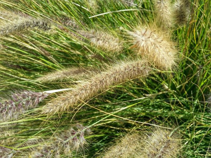 EyeEm Nature Lover Nature_collection Grass Taking Photos